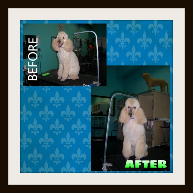 Before & After 10