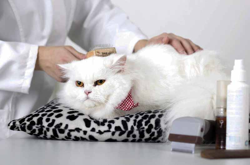 Just Four Paws Academy - Erie, PA - Grooming Program - Cat