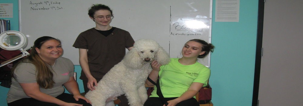 Dog grooming school just four paws academy of pet styling three students and dog solutioingenieria Choice Image